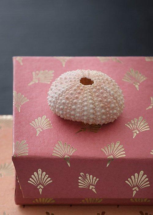 Sea shell coral mini sæt á 4 stk