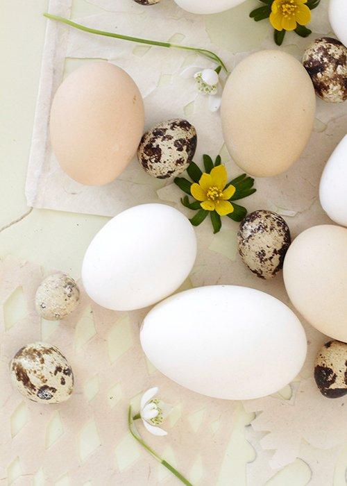 Hvide hønseæg (6 stk)